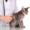 Ветеринарные клиники в Кондинском